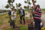 Kahta'da Ağaçlandırma Seferberliği Başladı