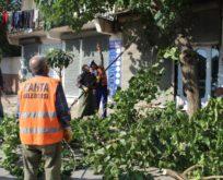 Trafik için, ağaç budama çalışmaları önemli